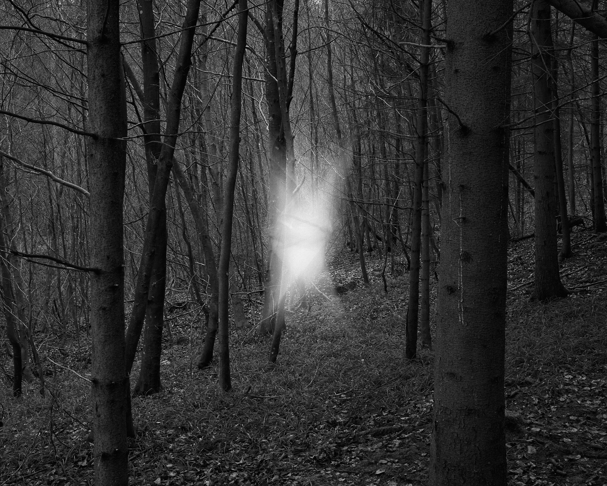 Black and white photograph of a forest scene with a mysterious light in the centre