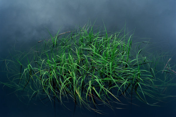 Floating vegetation in a water and sky reflection