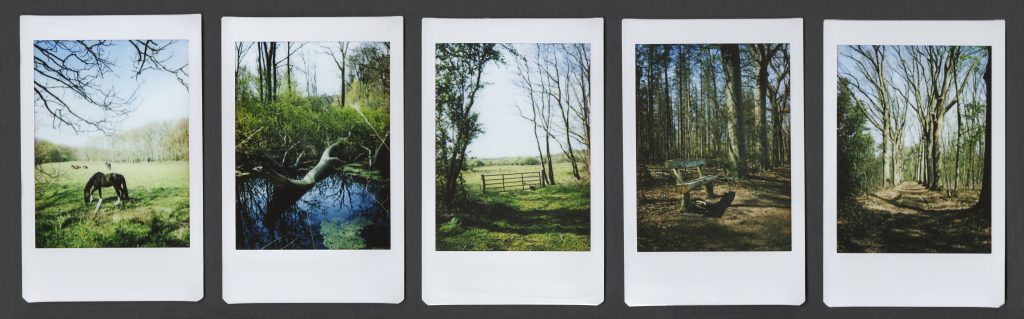 5 instax polaroids with landscapes fields