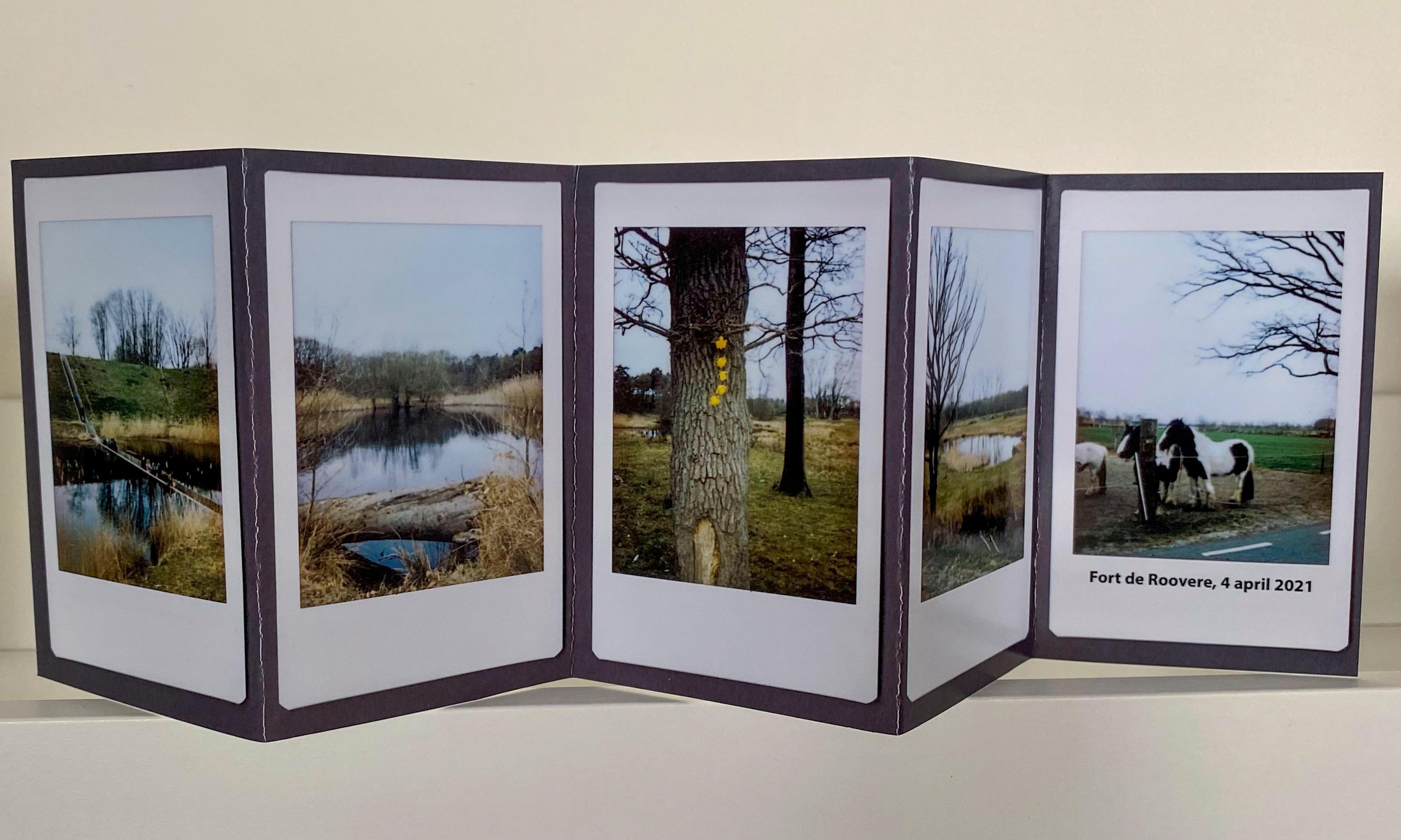 5 images printed and displayed on a gray cardboard back drop