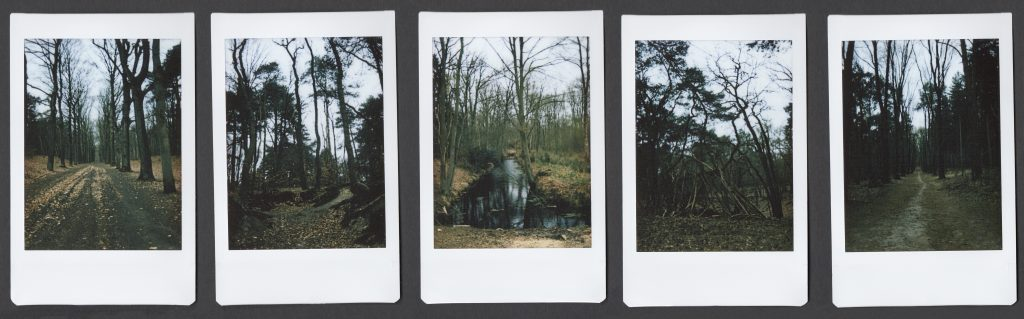 5 instax polaroids with landscape in woods