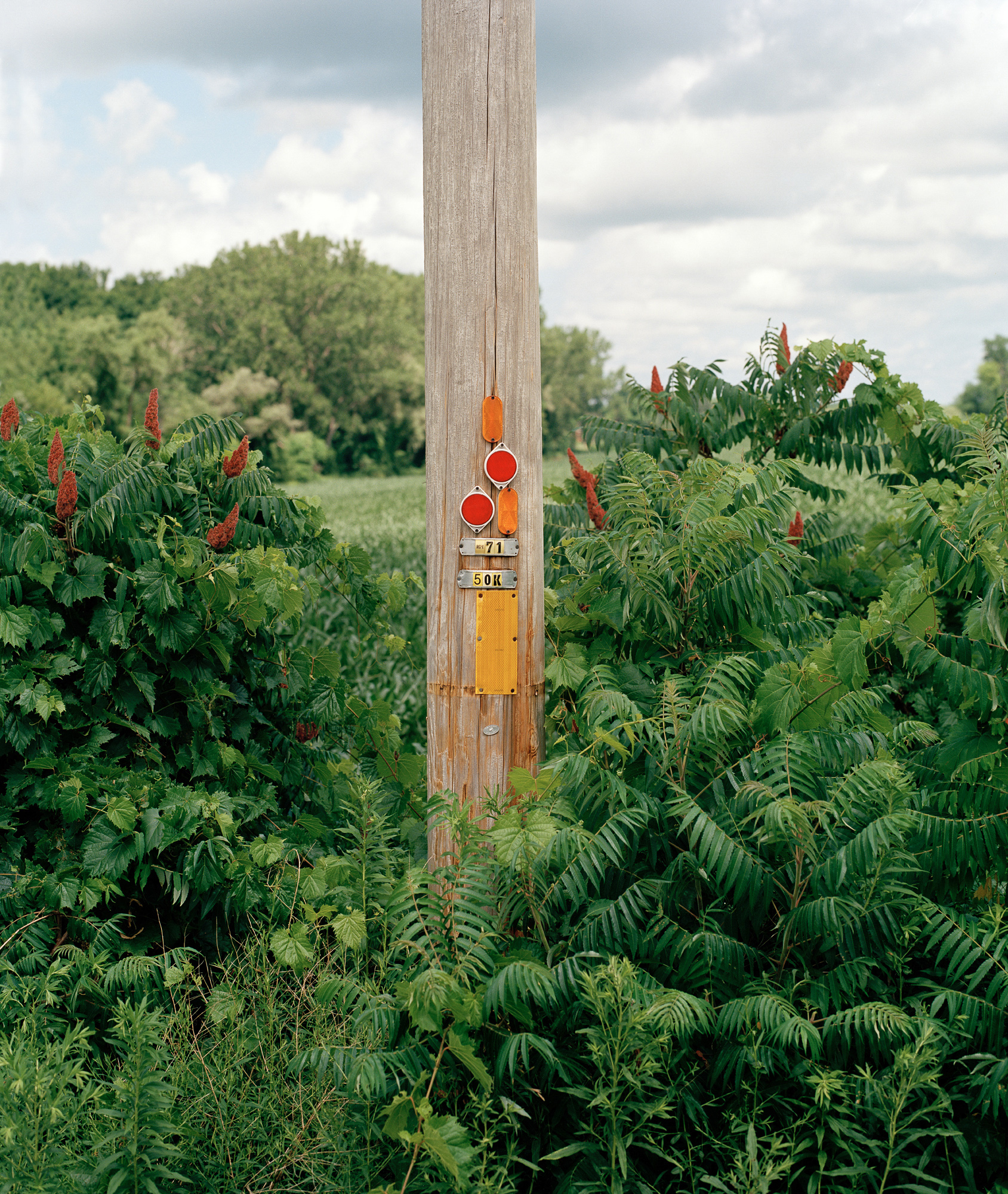 Power Line Pole with overgrown grass