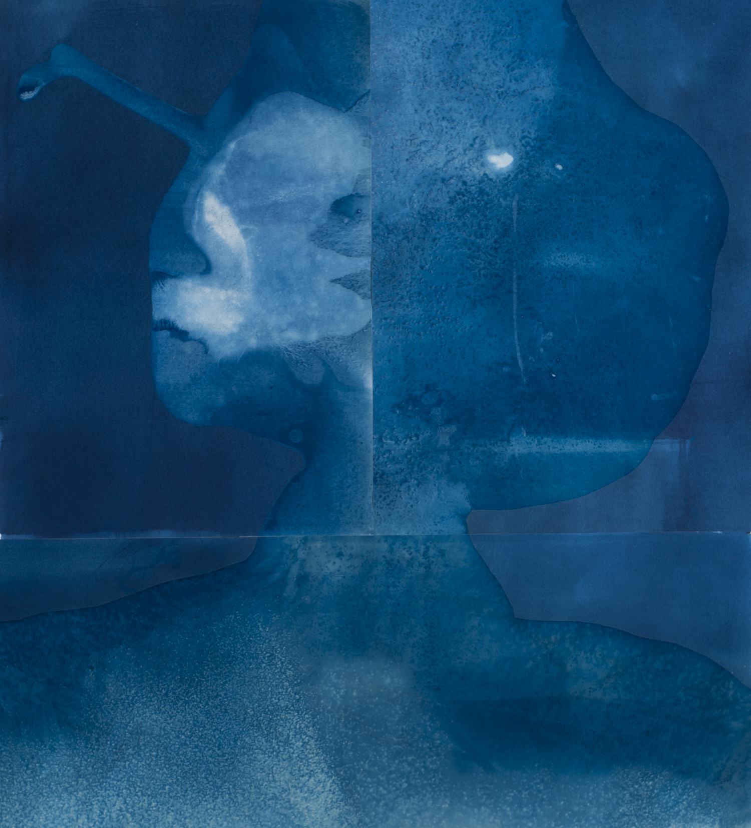 A large square abstract cyanotype print made up of three unique prints that have been made at the sea shore. The end result evokes a female face neck and shoulders.